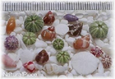 微小貝の写真