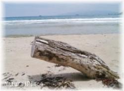 久美浜海岸