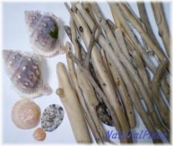 収穫した欠片 流木・貝殻